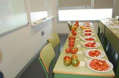 Degustación tomate ecológico puntdesabor 10