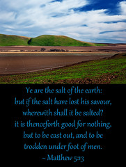 Matthew 5:13 (Scripture As Art) Tags: california city field religious king god religion jesus christian salinas valley fields bible agriculture beatitudes sermon christians kingcity centralcalifornia salinasvalley verse verses furrowed furrows sermononthemount bibleverse bibleart thebeatitudes
