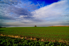 Land and sky (adam_moralee) Tags: blue sky tree adam green clouds contrast lens countryside interesting nikon skies bright side country somerset land fields crops distance tamron formations 18200mm moralee d3100 adammoralee