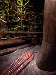 "Carboniferous Forest with Trilobite • <a style=""font-size:0.8em;"" href=""http://www.flickr.com/photos/34843984@N07/15516352096/"" target=""_blank"">View on Flickr</a>"