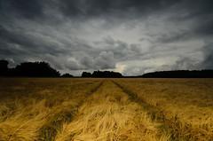 Önstalund, Upplands-Bro, Sweden (Marc Arnoud Rogier van der Wiel) Tags: field clouds nikon sweden sverige upplandsbro d5100 httpsrbphotographiccouk