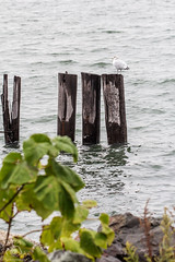 Perched Gull (JVierno77) Tags: new york ny canon island staten 100mm28macro 60d wwpw2014