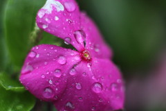 (HaydenKlein) Tags: flower color macro nature beautiful up canon fly pretty close bokeh t2i