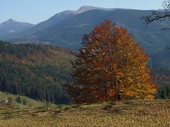 P1018615 (pavel B.) Tags: autumn carpathianmountains czarnohora