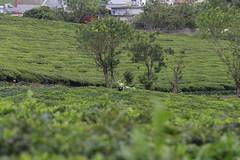 _MG_1091 (liem.ionetour) Tags: travel beautiful landscape nice asia tour du vietnam tay viet mai re gia dep sapa nam bac chau ione maichau dulich mocchau taybac hapdan ionetour