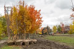 Hantz Woodlands, Detroit (paulhitz) Tags: canon woodlands detroit 150 sugarmaple hantz sugarmaples canon5dmk3 5dmk3 hantzwoodlands