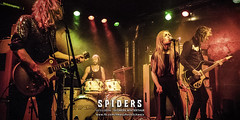 Spiders - 12/11/2014