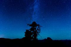 Twilight over Glacier Point (cylynex) Tags: california ca tree silhouette night stars yosemite nightsky shrub glacierpoint milkyway
