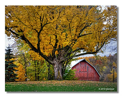Golden Tree (rjmonner) Tags: autumn red tree fall leaves barn rural golden midwest bellevue jacksonco bellevueia