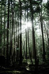 (December-Skies) Tags: tree forest lumix panasonic f25 sechelt sunshinecoast 14mm gx1