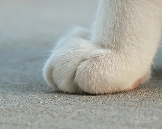 white toes by im thinking outloud