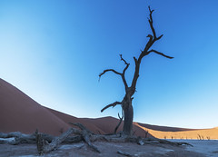 Sossusvlei - Namibia (wietsej) Tags: sossusvlei namibia namibnaukluft dead tree dunes sony a7rm2 a7rii zeis sal1635z 161 1635