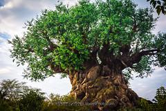 Tree of Life (vowellphoto) Tags: waltdisneyworld disneysanimalkingdom disneyworld disney treeoflife d7100 nikon sunrise discoveryisland wdw