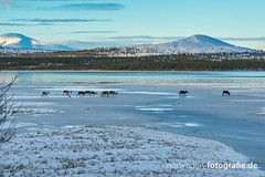 DSC02621 (norwegen-fotografie.de) Tags: norw norwegen norway norge femunden femundsmarka villmark hedmark see wildnis wald landschaft
