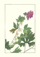 Aconite (Japanese Flower and Bird Art) Tags: flower aconite aconitum japonicum ranunculaceae hisui sugiura nihonga woodblock print japan japanese art readercollection