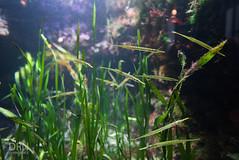 Monterey Bay Aquarium - 2016 (dunksrnice) Tags: 2016 wwwdunksrnicenet dunksrnice rolotanedojr rolotanedo rolo tanedo jr rtanedojr