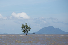 The Lone Tree (virtualwayfarer) Tags: thai thailand visitthailand asia southeastasia krabi krabitown krabiprovince water destination travel travelphotography tourism traveling hightide lonetree estuary bay shallowwater alone isolated strong standingstrong resilient mangroveswamp ferry southernthailand sea ocean thingstosee visittothailand canon canon6d travelphotographer travelinspiration lifestyleinspiration