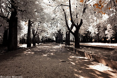 Avenue of trees (BryzePhoto) Tags: infrarossi infrared ir r69 690nm 690 truecolor castelvetrano sicily italy parcodellerimembranze love rosa amazing art alberi trees cute beautiful way viale emotions emotion life lovely moment nature natura garden villacomunale villa