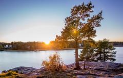 Sunshine (Flobbii) Tags: sunset turku finland autumn landscape photography sun ocean tree blue sky canon eos 6d sigma 24mm