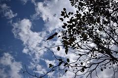 Minimalistic (Debatra) Tags: sky skyporn tree clouds kapurthala railcoachfactory railcoachfactorykapurthala punjab india rcf nikon nikkor 1855 1855mm d3300