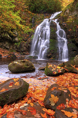 Autumn Gold (Waterfall Guy) Tags: great smoky mountains national park tennessee spruce flats falls autumn fall leaves leaf color peak