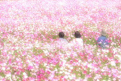 Scene of autumn (Colorful-wind) Tags: 2016 autumn color colorful colors cosmos fall flower fujifilm fukuoka japan light lightandshadow nature park pink plant white xt1