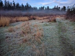 In the Hollow (ecstaticist - evanleeson.com) Tags: vancouver island victoria cuthbert holmes park morning frost fog wet fall