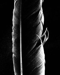 Plume (Natalya Karavay) Tags: noireetblanc poem delicate minimalist minimalism minuit minimal poetic poetry noir modern abstract blackandwhite feather plume
