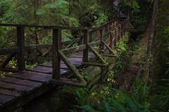Lush rainforest bridge (Storm'sEndPhoto) Tags: 2016 stormsendphotography stormsendphoto bc boardwalk britishcolumbia canada duckboard imwald metsss nationalpark pacificrimnationalpark path polku rainforest temperaterainforest tofino trail vancouverisland walk wanderweg