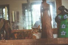 Menininha 2 (dvasconcellos27) Tags: exakta zeiss slr analog filmisnotdead filmisalive filmphotography kodak colorplus capucho riodejaneiro brasil brazil cat catportrait pet animal