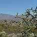 2016-10-14 Saguaro National Park 12