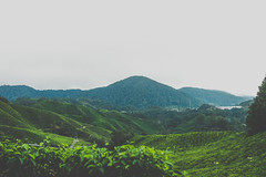 DSCF1114 (tzeyangtan) Tags: cameron highlands getaway green sgpalas tea plantation photography