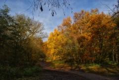 after claude lorrain (dick_pountain) Tags: london hampsteadheath autumn trees leaves foliage mashup likeapainting golden claude lorrain
