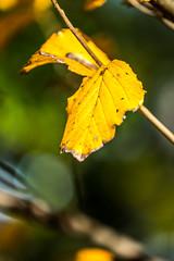 DSC_1253 (Darjeeling_Days) Tags: