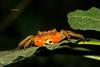 201409150001 (Giovanni Caddeo) Tags: nikond7100 sigma150mmf28exdgoshsmapomacro animalplanet earthhour nginationalgeographicbyitalianpeople nikonclubit defendersofwildlife naturalmente totalphotoshop wildlife