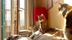 """""""Descanso"""" (atempviatja) Tags: balcon living luz mascotas interior gatos descanso"""