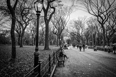Winter is Coming (*ScottyO*) Tags: ny nyc manhattan usa america centralpark newyork path road trail bench people trees lamp light monochrome bw blackandwhite fence leaves grey branches grass clouds landscape city urban park