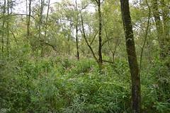 DSC_1037 (jeannettejacobs) Tags: biesbosch natuur bos