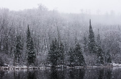 Snowfall (Wild Birdy) Tags: winter snow snowfall mn minnesota gulch lake snowflakes november snowstorm blanche trees bokeh landscape scene reflection pine paul bunyan state forest hubbard snowflake pretty beautiful water soft peaceful northern north