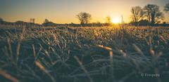Frostig.................. (petra.foto on/off) Tags: canon fotopetra 5dmarkiii sonnenaufgang frost frostig morgens sonnenlicht nature landschaft morgenstimmung germany norddeutschland gras wiese gefroren