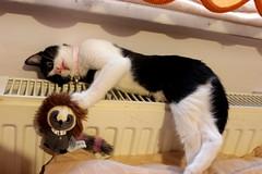 Patik (SaRDeS70) Tags: patik cat kedi smokincat