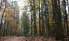 13-IMG_6998 (hemingwayfoto) Tags: freizeit herbst herbstlaub mittelgebirge november taunus wald wanderung weg