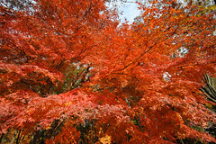 20161204-DS7_6538.jpg (d3_plus) Tags:  a05 wideangle d700 thesedays  architecturalstructure   kanagawapref   sky park autumnfoliage  japan   autumn superwideangle dailyphoto nikon tamronspaf1735mmf284dild  street daily  architectural  fall tamronspaf1735mmf284dildaspherical touring streetphoto  nikond700 tamronspaf1735mmf284 scenery building nature   tamron1735   tamronspaf1735mmf284dildasphericalif   autumnleaves