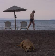 Summer Walks Away (Iva T.) Tags: greece thessaly magnesia beach summer nea anchialos volos municipality dog parasol chair sea seaside