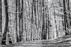 Walking into the Light... (Ody on the mount) Tags: anlässe bäume licht pflanzen schwäbischealb wald wanderung wege bw highkey monochrome sw sonnenbühl badenwürttemberg deutschland de