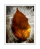 RIP mum. Flickr ID Mara1 (Jackal1) Tags: leaf nature lordswill rip mother gold words text orange conceptual dof
