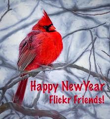 Happy New Year! (Wes Iversen) Tags: brighton cardinaliscardinalis cardinals kensingtonmetropark michigan milford northerncardinals tamron150600mm birds painterly wildlife winter hss sliderssunday
