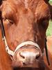 Howell Farm Plowing Match 134 (Adam Cooperstein) Tags: howelllivinghistoryfarm mercercountyparkcommission mercercounty newjersey mercercountynewjersey lambertville lambertvillenewjersey