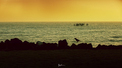 """""""One leap at a time"""" (Robins Mathew Z) Tags: silhouette pondicherry sea sunrise travelphotography travelindia"""