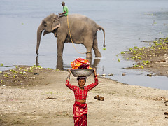 Nepal -laundry and elephant (Dick Verton ( more than 13.000.000 visitors )) Tags: travel nepal woman elephant river asia riverbank sauraha mahout laundries raptiriver